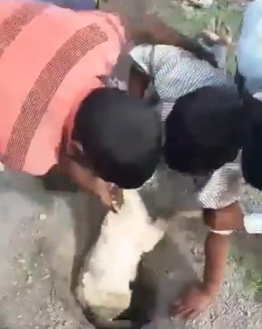 इस युवक ने अपनी जान जोख़िम में डालकर बकरी को बचाया : वीडियो हुआ वायरल